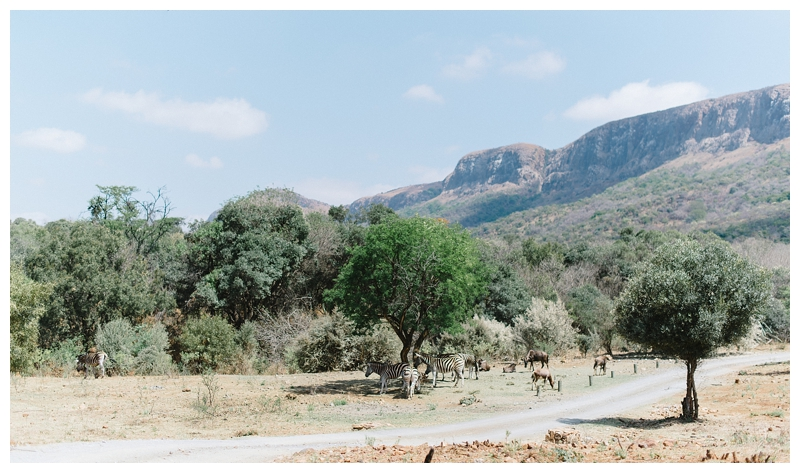 Louise Vorster Photography_Red Ivory Wedding_003