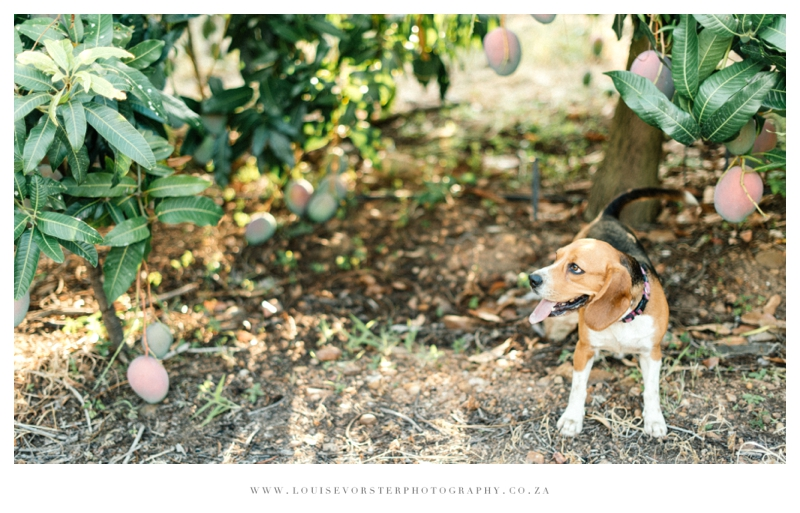 Louise Vorster Photography_Alicia&Dirk_023